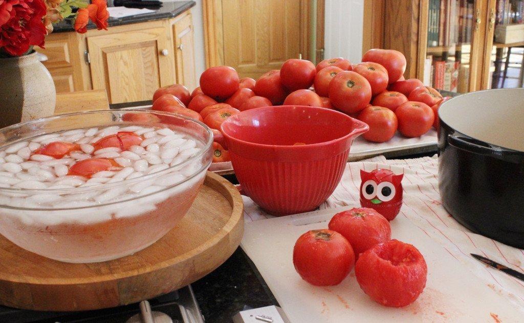 process tomatoes